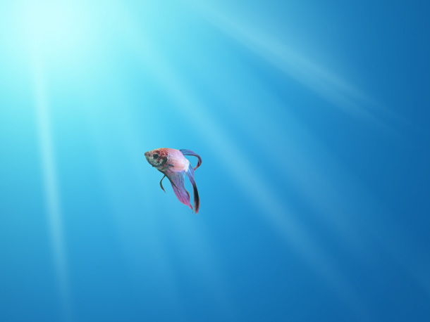 isolated fish