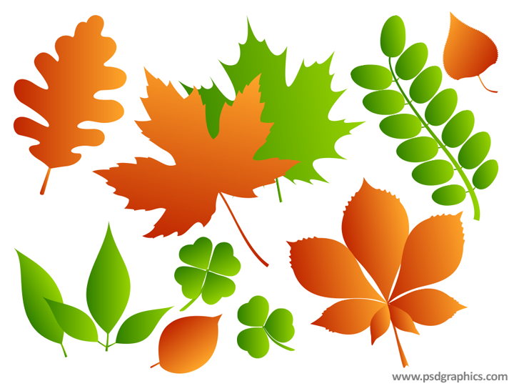 Leaves, leafs collection